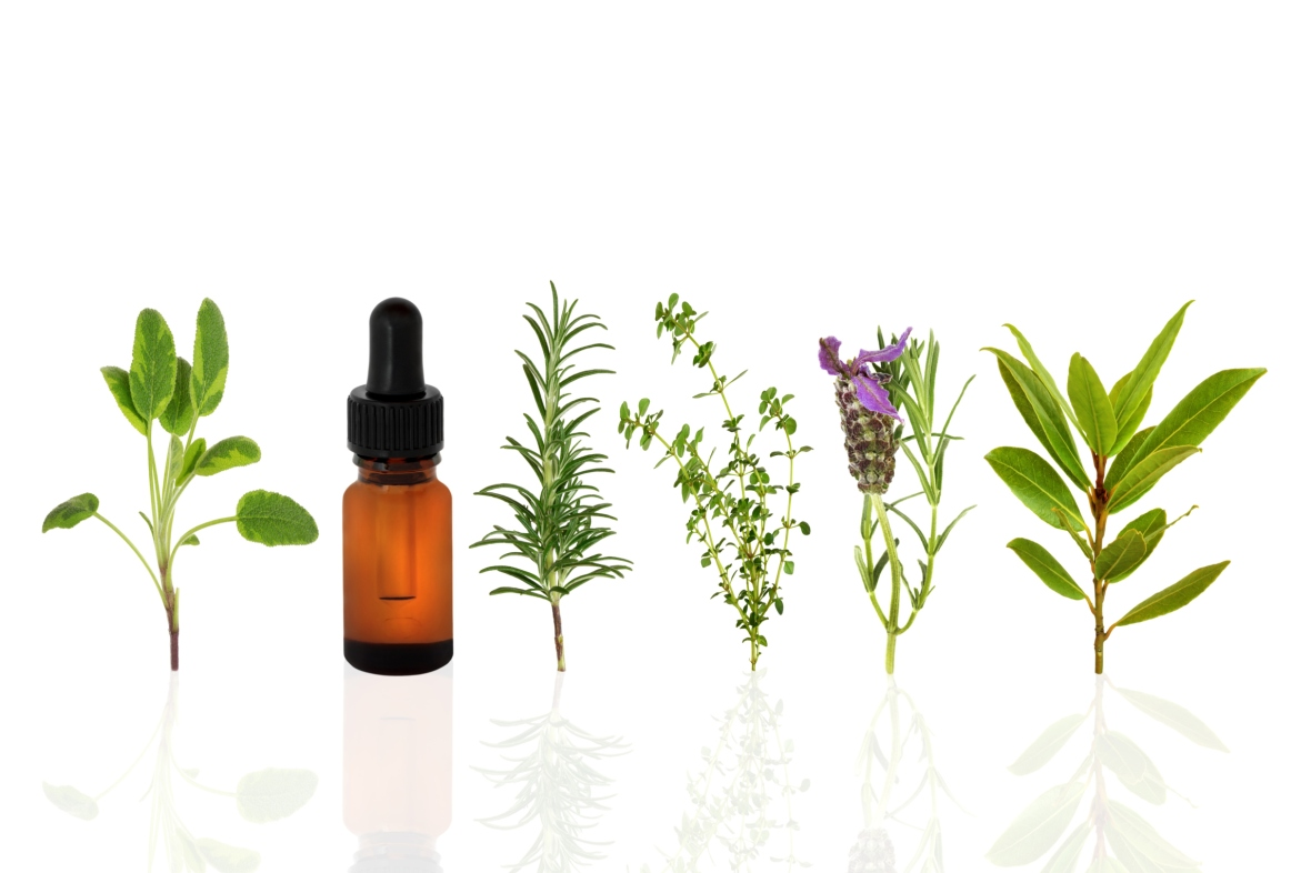 herbs oil plants essential oils