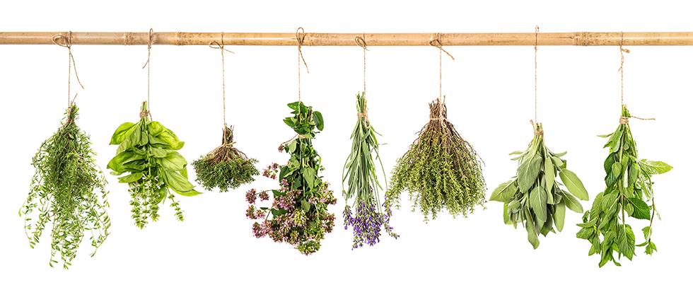 herbs plant medicine